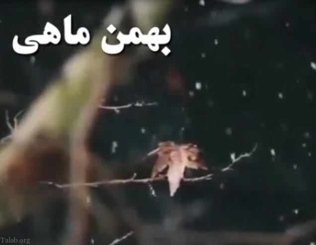ویدیو کلیپ برای تبریک تولد بهمن ماهی